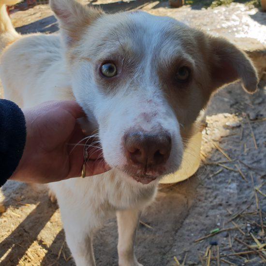 Shelter Daniela (9)